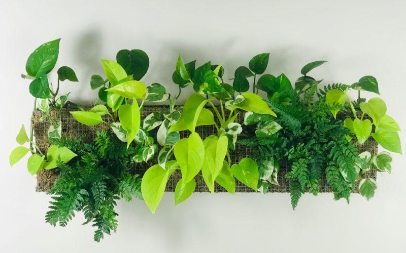 guide complet mur végétal intérieur